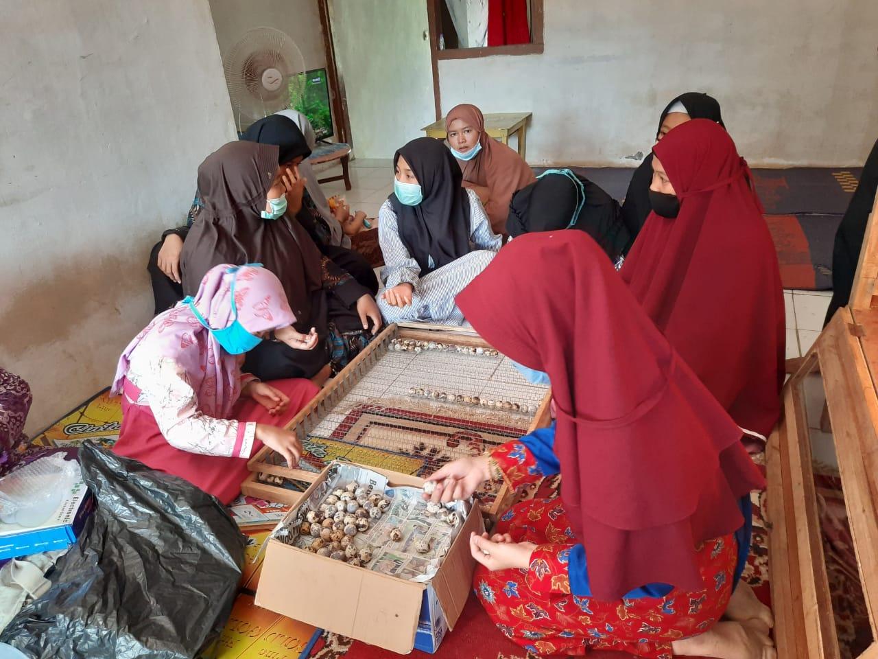 Pelatihan Penetasasan Telur Puyuh yang diikuti 13 orang anak Panti Asuhan 'Aisyiyah Kasih Ibu pada Rabu, 19 Agustus 2020 di peternakan Dian Hidayatullah, S.Pt., M.Ling., Pematang, Gubernur Kota Bengkulu.