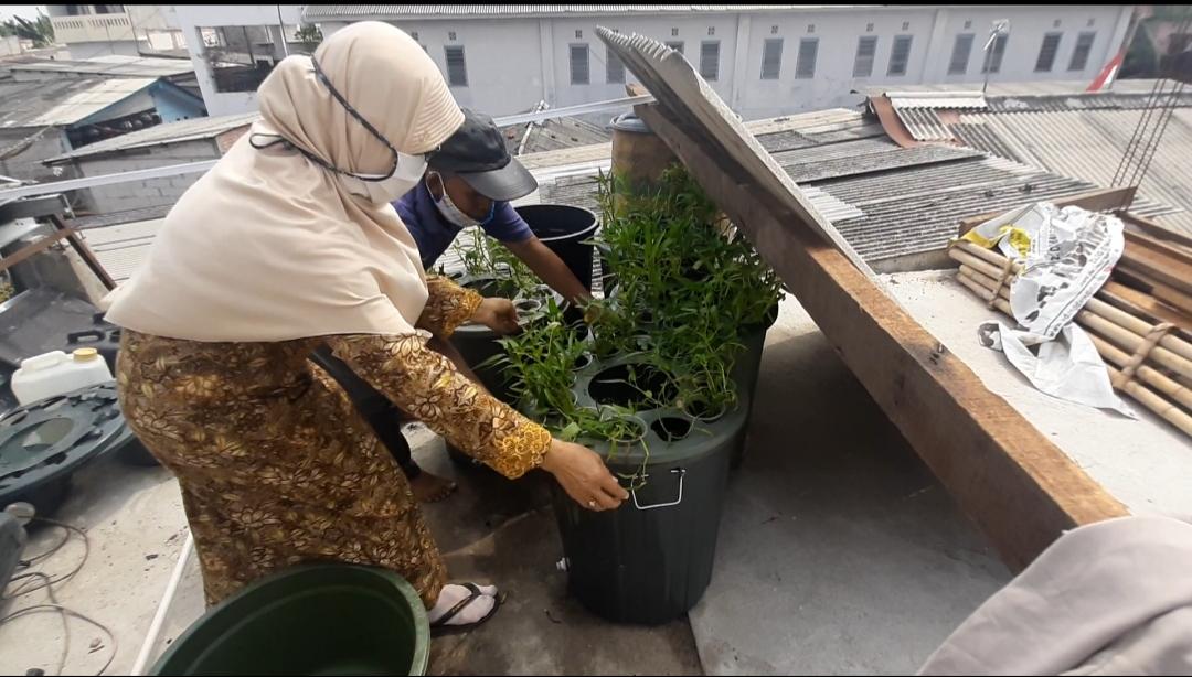 Ketahanan Pangan Melalui Budikdamber Lele dan Tanam Sayur pada Masa Pandemi Covid-19 di Kampung Sawah, Jakarta Utara.